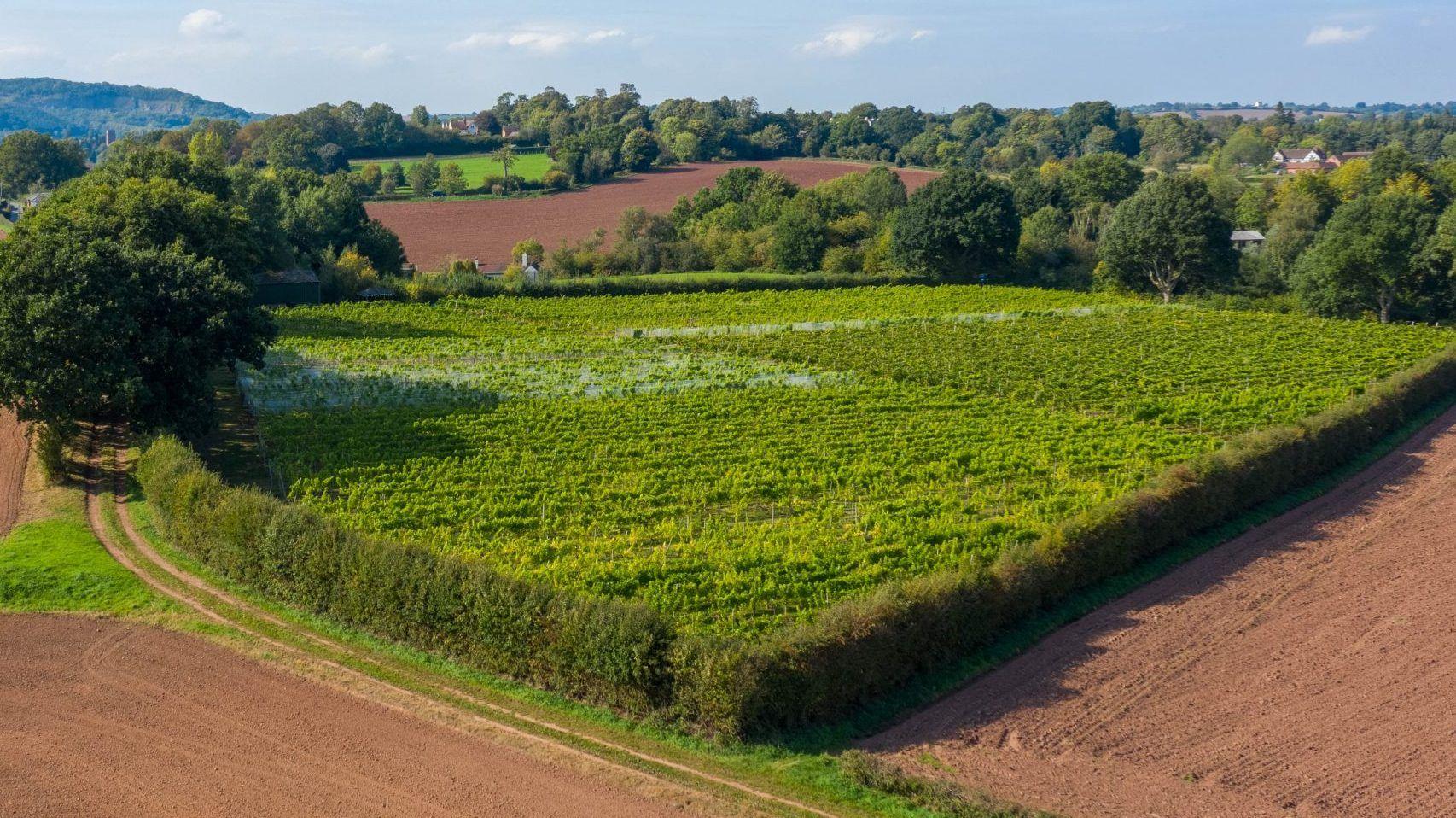 Drone image of Astley Vineyard taken in 2020
