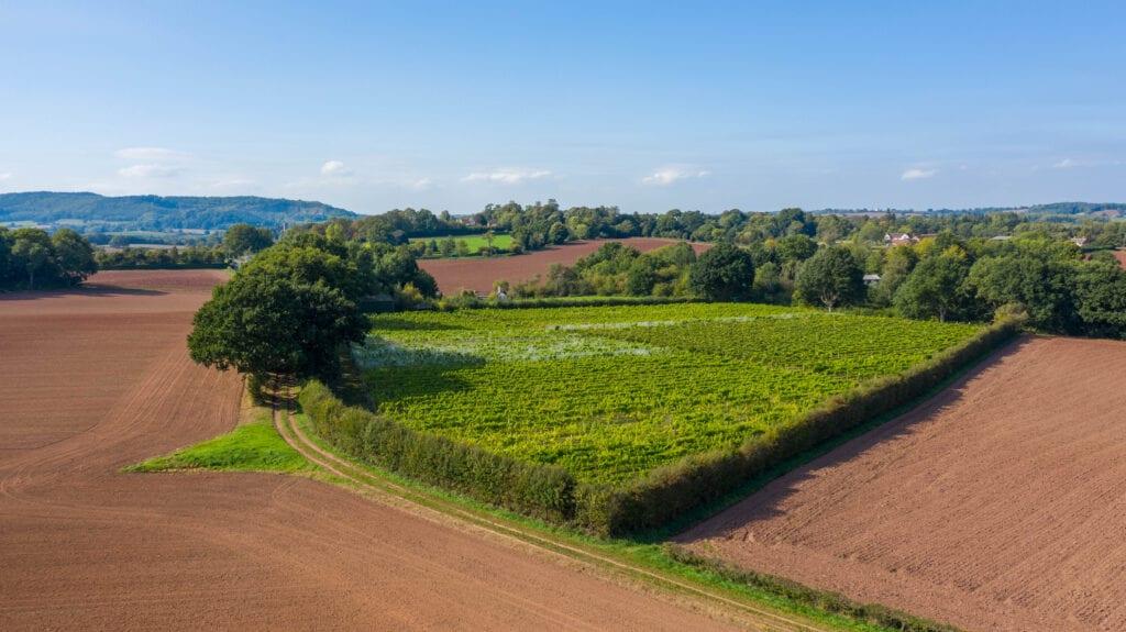aerial view by drone astley vineyard worcestershire
