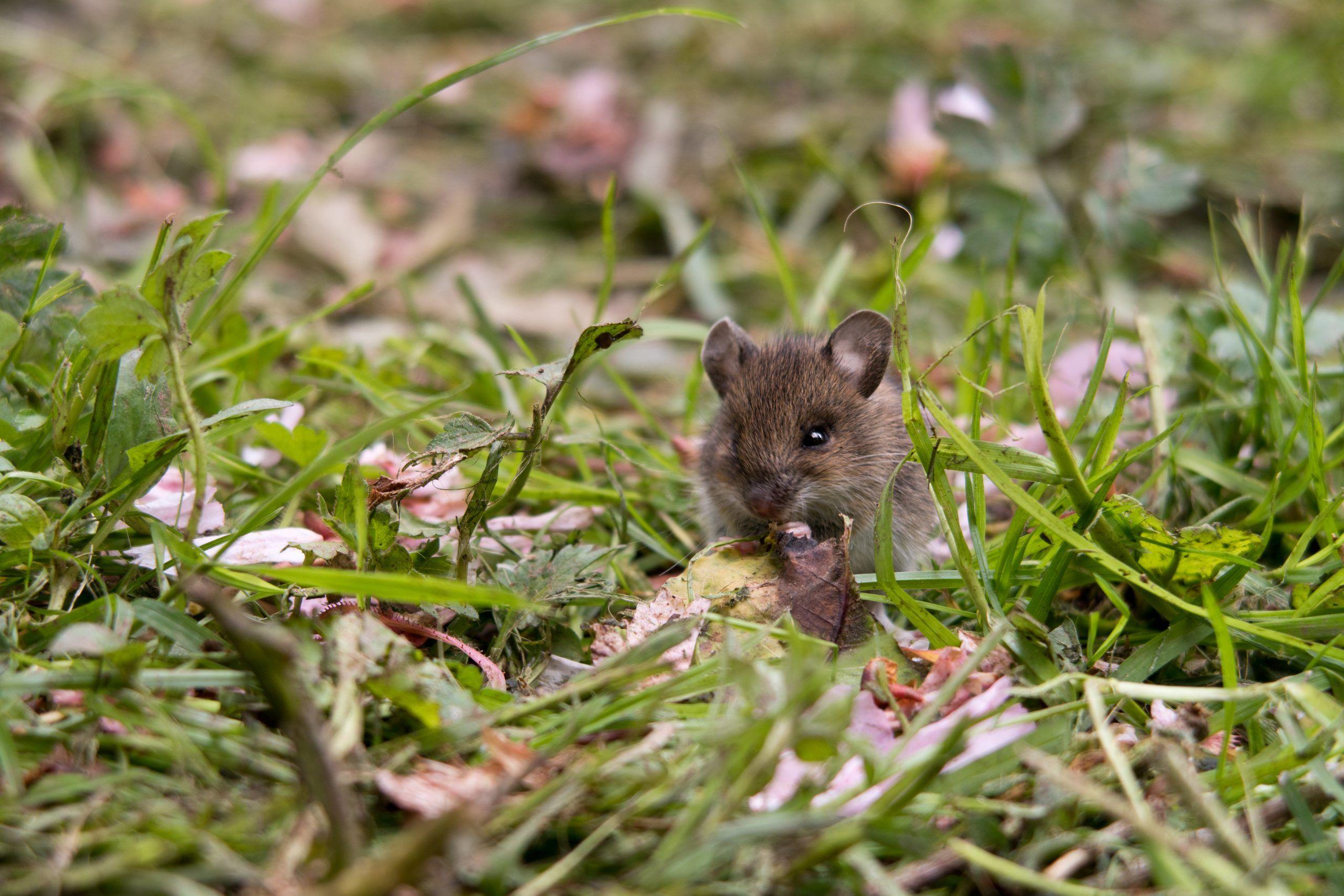Astley Vineyard - wildlife